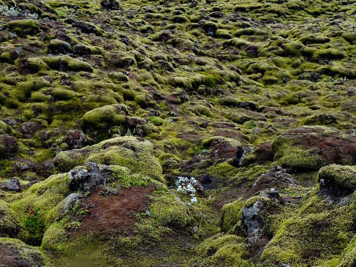 Island Lavafeld Eldhraun