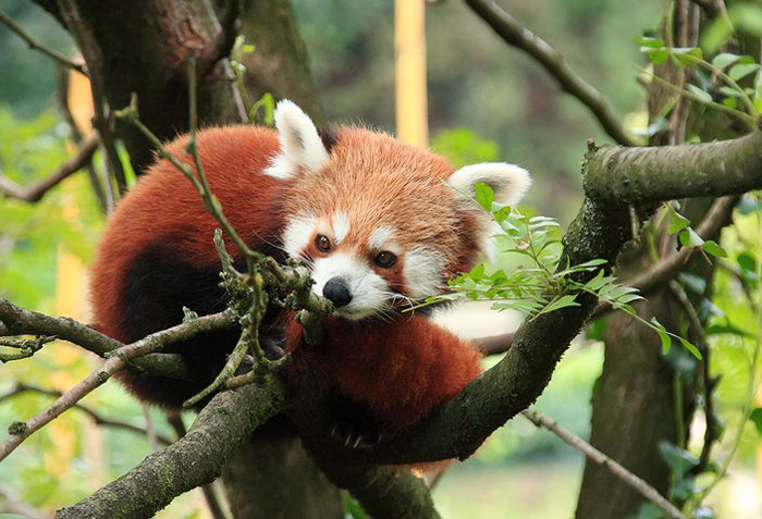 Reiseglueck Gardasee Bardolino travel Safari Park Parco Natura Viva kleiner Panda
